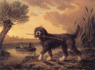 Water-dog -1803